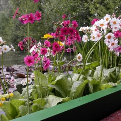 Teichpflanzen-Sortimente von NaturaGart
