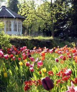 Frühlingsblüher im NaturaGart Park