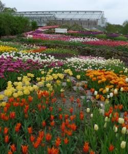 Frühlings-Blüte im Naturagart Park