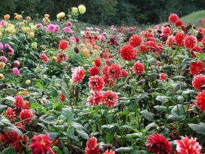 Blumenpracht im NaturaGart Park Ibbenbüren
