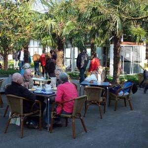 Kaffee und Kuchen unter Palmen bei NaturaGart