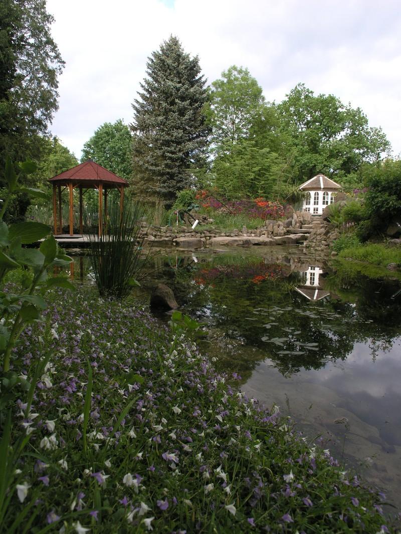 Teiche planen bauen pflegen tipp 19 gartenteich for Gartenteich pflege