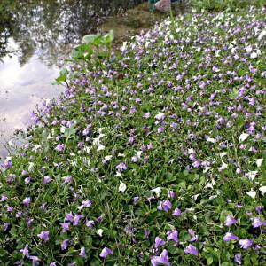 Uferpflanzen