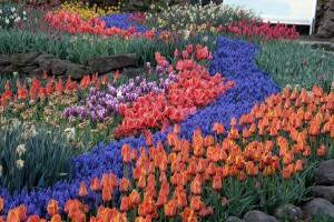 NaturaGart Park Tulpen