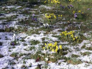 Frühlingsblüte im NaturaGart Park