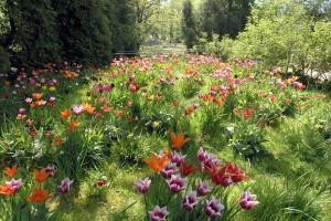 Die Blumenwiese blüht monatelang