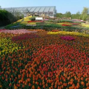 Blumenwiese im NaturaGart Park