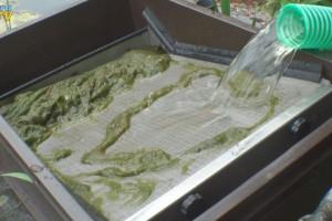 Grobfilter hält Fadenalgen zurück