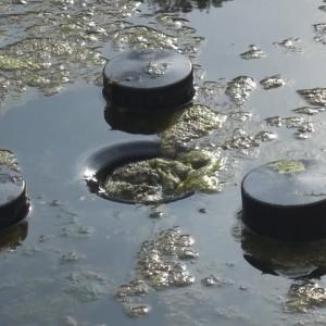 Skimmer mit naturagart teiche planen bauen und pflegen for Algen im fischteich