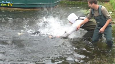 Arbeiter setzen Störe im NaturaGart Aquarium aus