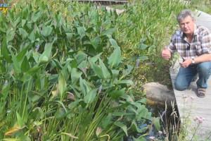Norbert Jorek hockt auf einem Steg neben enem mit Riesenhechtkraut bewachsenen Filtergraben