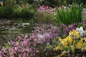 Blumenbewachsenes Teichufer
