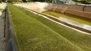 Ein mit NaturaGart Ufermatte gebautes Teichufer