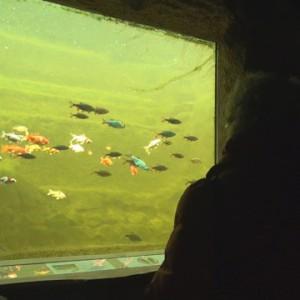 Blick in den Teich durch ein Teichfenster