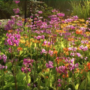 Blumen am Teichufer