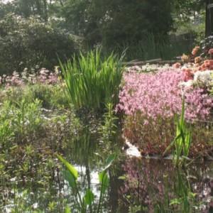 Blick über einen Teich auf ein bewachsenes Blumenufer