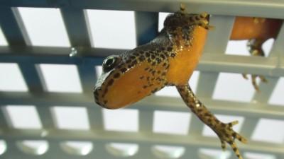 Kleines Reptil in einem Plastikgitter