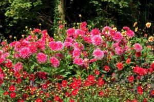 Blumen am Teichrand