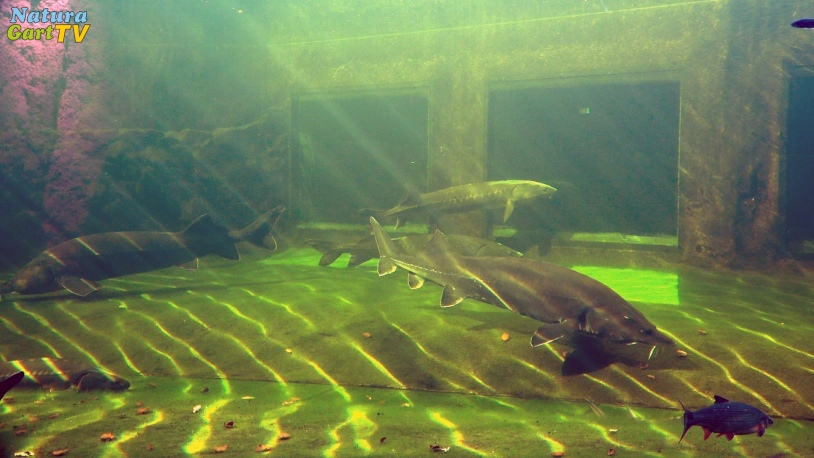 Gartenteich buch teich infos for Gartenteich aquarium