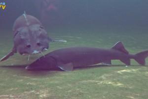 Messe mit naturagart teiche planen bauen und pflegen for Aquarium fische im gartenteich