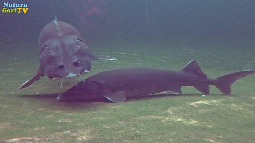 Gartenteich schwimmteich fischteich naturteich zum for Gartenteich im winter fische