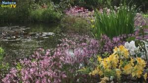 Teiche richtig planen mit naturagart teiche planen for Gartenteich planen teichbau