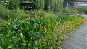 klares wasser wenig algen im teich mit naturagart teiche planen bauen und pflegen. Black Bedroom Furniture Sets. Home Design Ideas