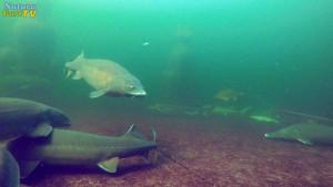 20171025-naturagart-fischfutter-strauch-hecke-teichnetz-algen-vermeiden-id2005