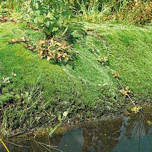 39000-naturagart-teichbau-ufermatte-65-cm-breit-3