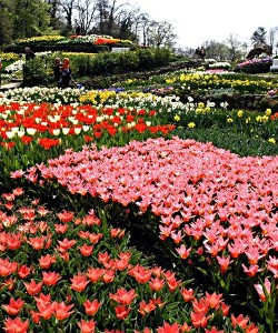Blühende Blumenbeete