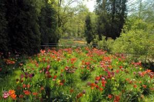 Blühende Blumenwiese im NaturaGart Park