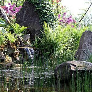Teichufer mit kleinem Wasserfall
