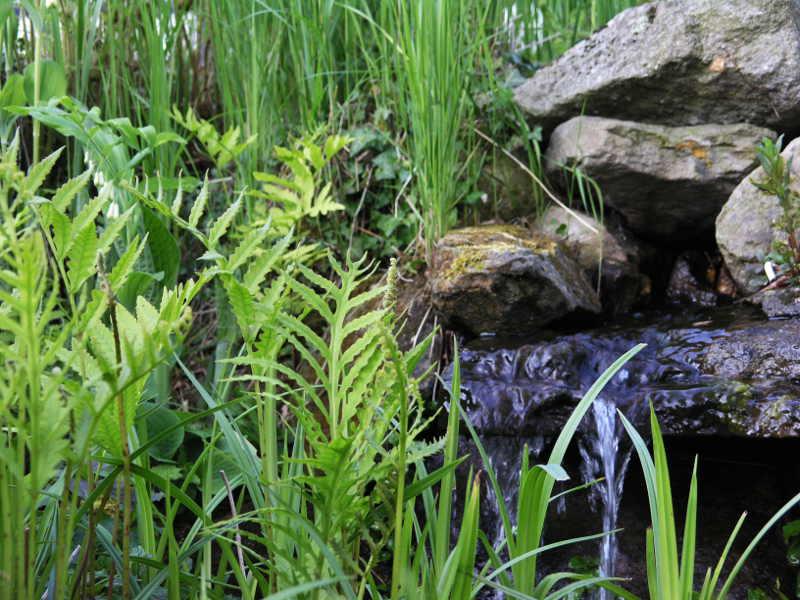 Bachlauf Im Garten Produkte