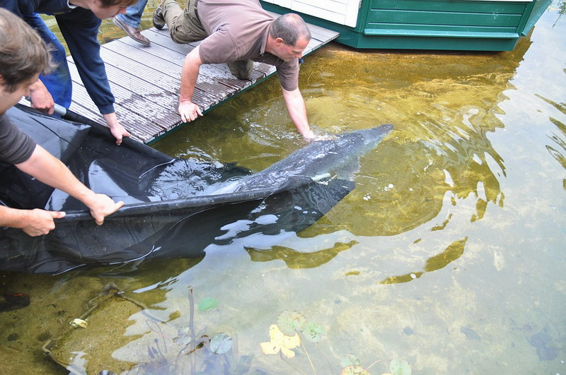 Gemeinsame Ankunft des ersten Beluga Störs im NaturaGart Park | NaturaGart #XF_82