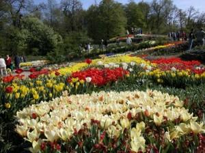 Tulpenblüte im NaturaGart Park