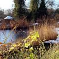 Ein Teich wandelt sich mit den Jahreszeiten