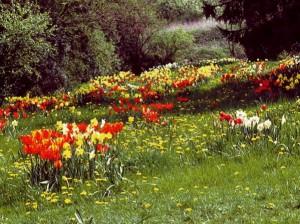 Blumenzwiebeln von NaturaGart