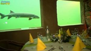 Candle-Light-Dinner im Kaltwasseraquarium