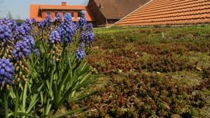 Ein begrüntes Dach ist schön und nützlich.