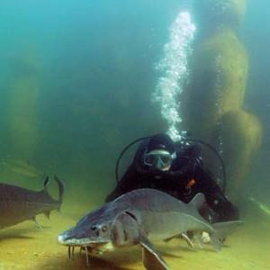 Fischteich fischteich im garten informationen ber for Gartenteich ohne filter