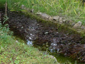 Verschiedene Teichpflanzen unterstützen den Export der Nährstoffe aus dem Gartenteich.