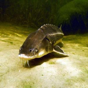 Filtertechnik entfernt Sediment in Fischteichen