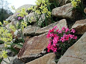Blumen wachsen in einer Trockenmauer