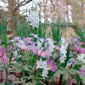 Frühlingsblumen bei NaturaGart