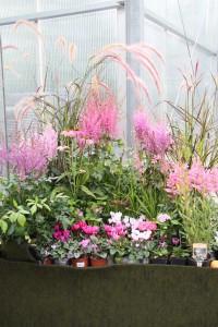 Pflanzen und  Farbe: Welche Wirkung entsteht, wenn man sich für eine Farbe entscheidet?