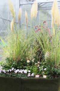 Gräser schaffen eine ruhige Atmosphäre und setzen Akzente in unterschiedlichen Höhen