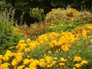 Teichpflanzen und Gartenpflanzen: die eigene Gärtnerei bietet eine breite Palette für die Gestaltung des Gartens.