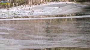 Im Winter kann das Wasser im Teich oft noch stärker sinken, als im Sommer.