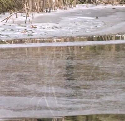 Gartenteich schwimmteich fischteich naturteich zum for Gartenteich im winter