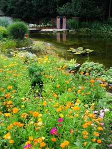 Natur spielt eine wichtige Rolle. Sie schafft die Atmosphäre am Gartenteich und hilft dabei, das Wasser gesund und sauber zu halten.